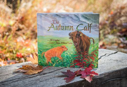 The Autumn Calf